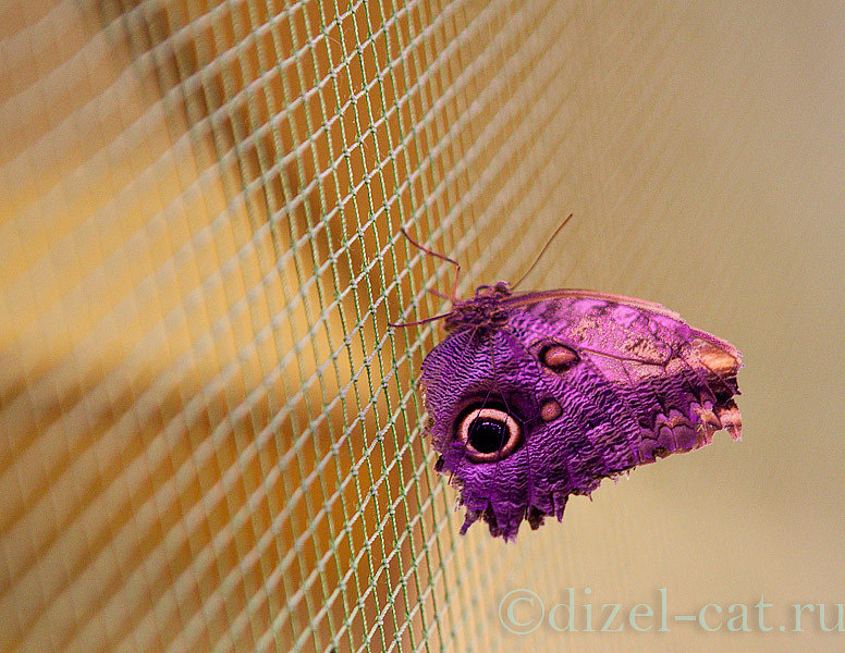 http://pics-akamai.slickpic.com/Mjc2NTc1YjA5YjA2Ng,,/20120826/MTcxODQzOTZiMDk,/p/1600/IMG_8059.jpg