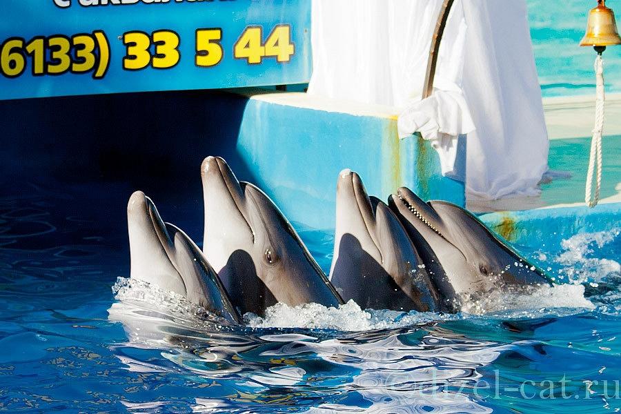 http://pics-akamai.slickpic.com/Mjc2NTc1YjA5YjA2Ng,,/20120826/MTcxODY1MTY5Njk,/p/1600/IMG_9323.jpg