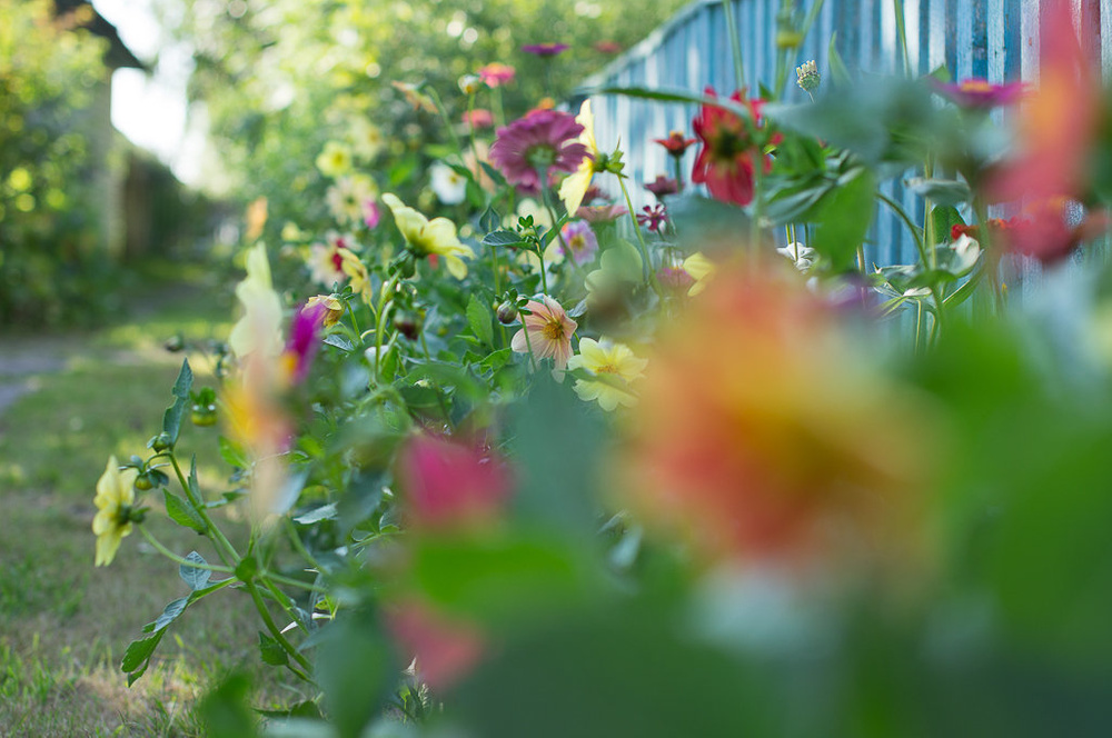 Цвета цветов
